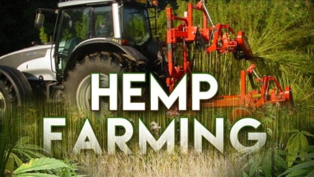 California Okays Hemp for Farmers