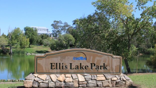 Ellis Lake Park Debate: Improvements vs. Displacement