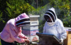 Mount Diablo Beekeepers Association is all about the bees