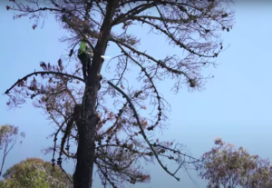 East Bay Parks receive $13.5M to clear dying trees.