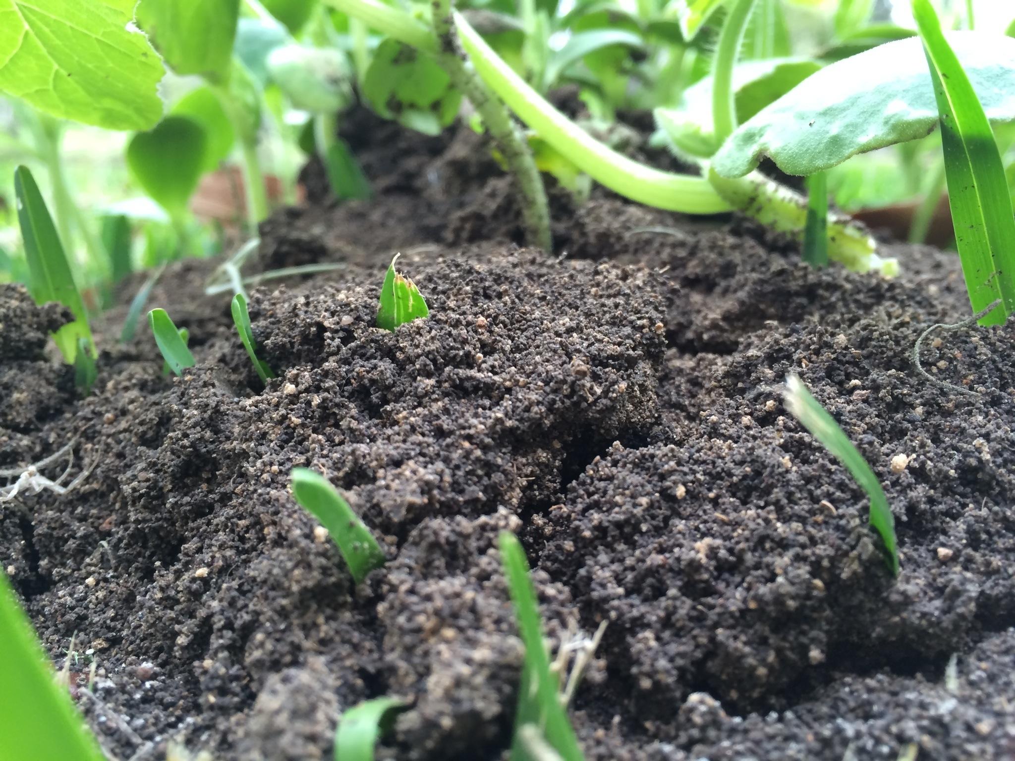 Gardenwise: Nurture the Ground Beneath Your Feet — The Importance of Healthy Soil