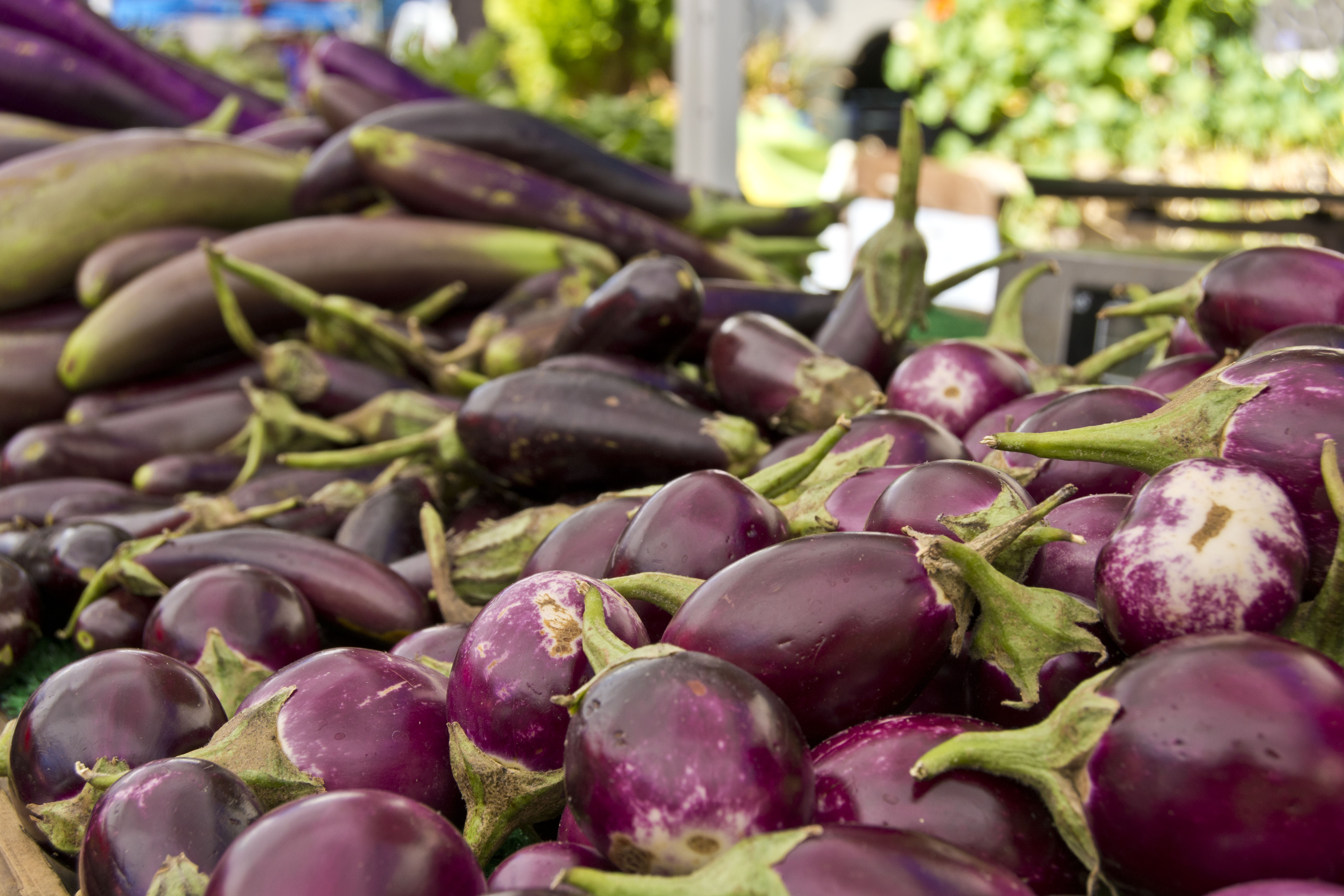 Eggplant – Not Just for Parmigiana Anymore