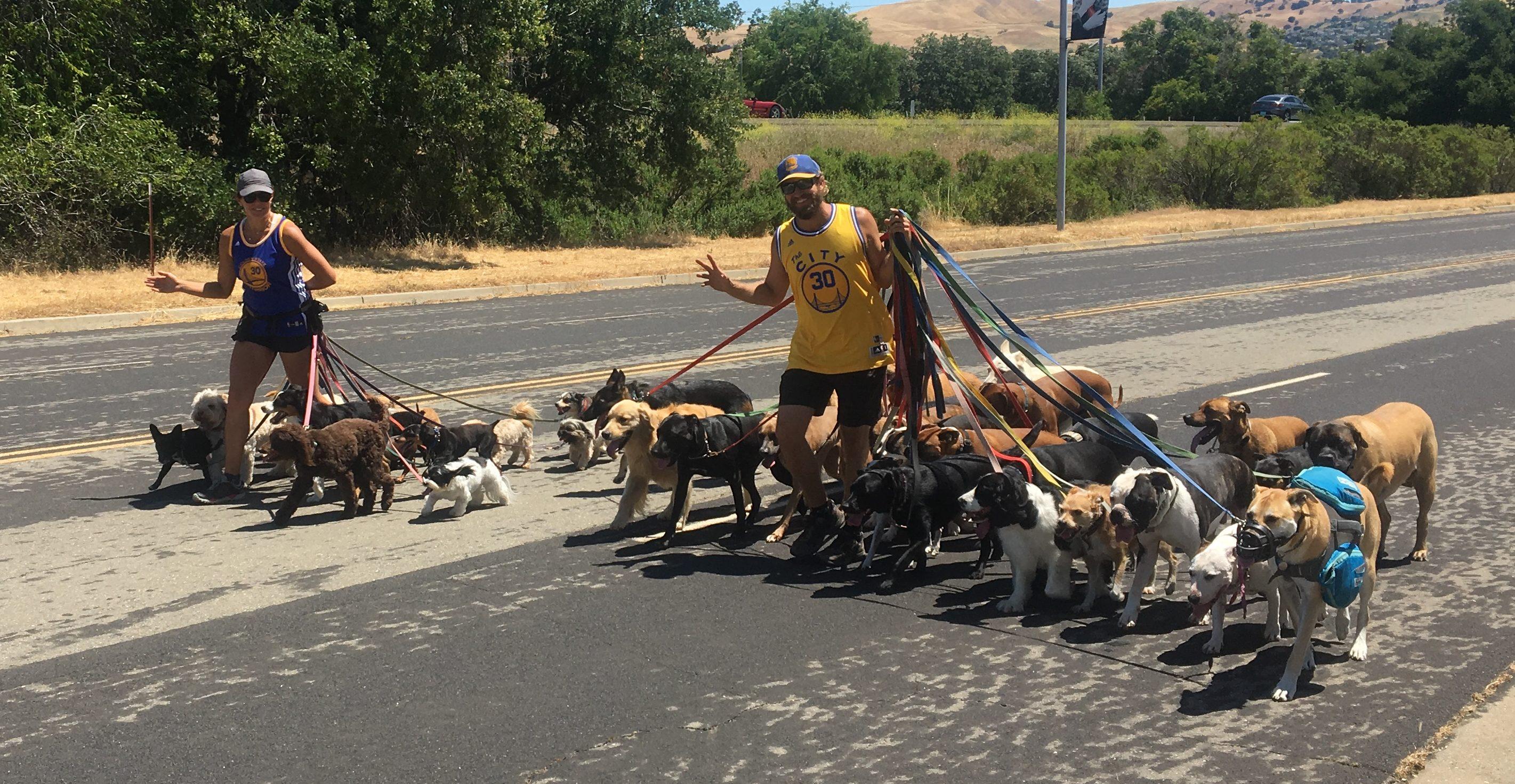 Z Animal Lovers – America's Best Dog Walkers?