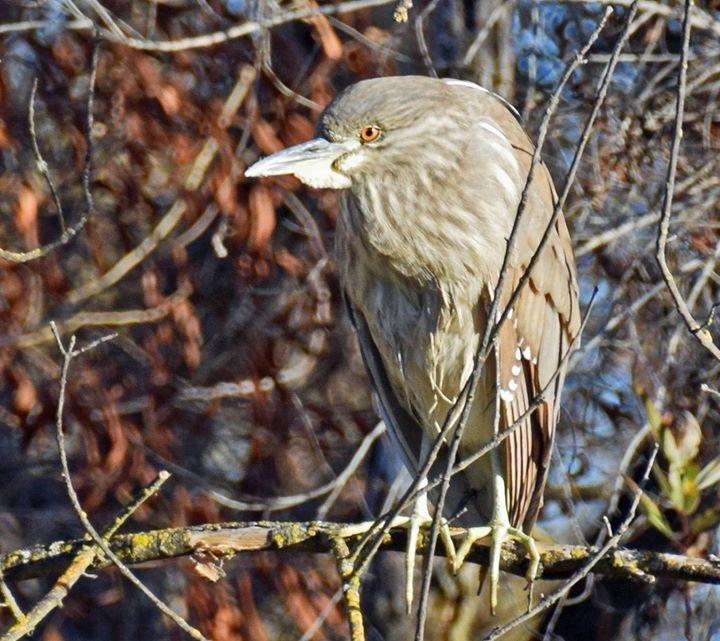 Fewer Bird Species Found in Contra Costa