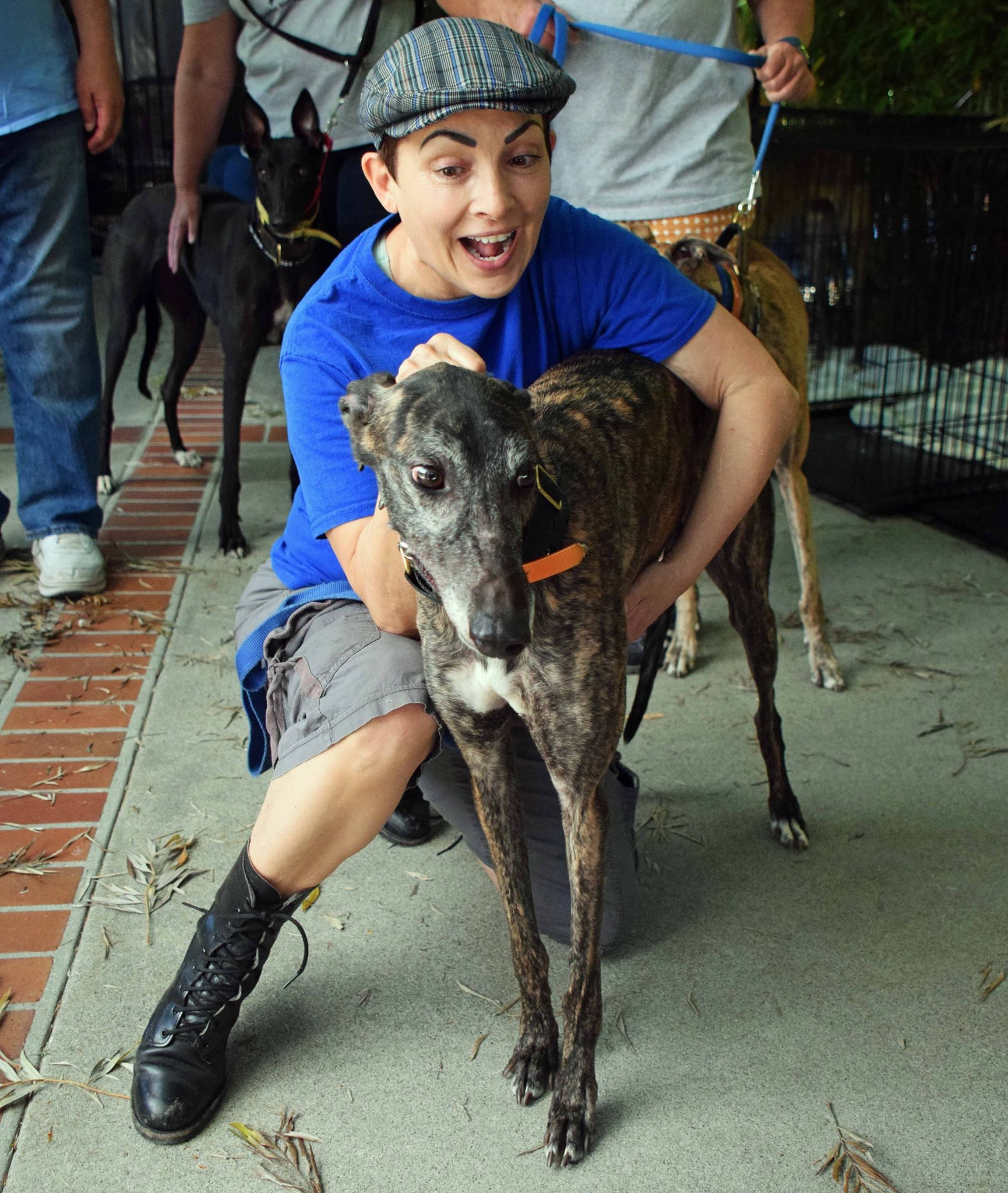 After the Racetrack: Greyhounds Find a Loving Finish Line