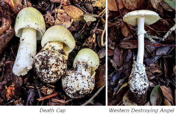 Wild Mushroom Warning