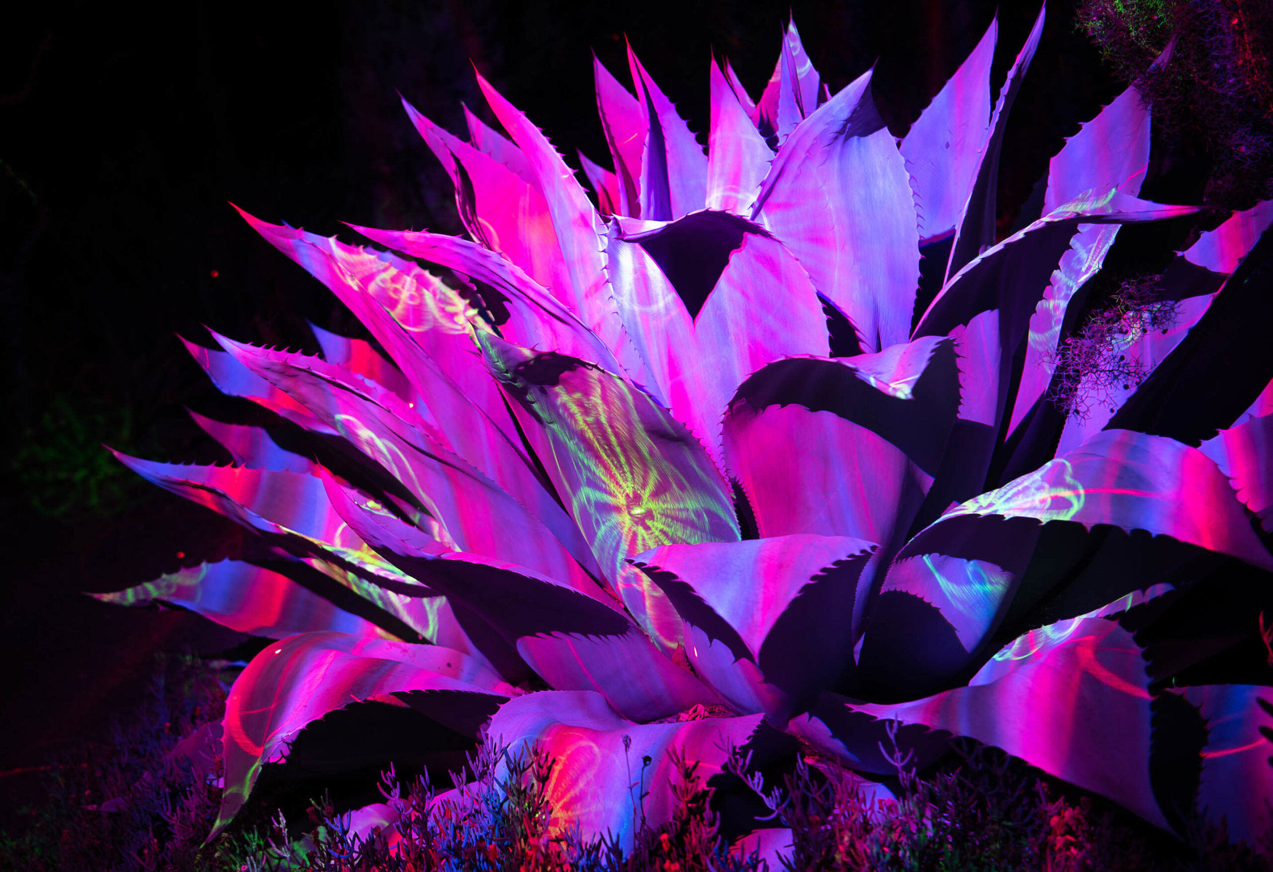 Brighten your holidays at the Garden of d'Lights