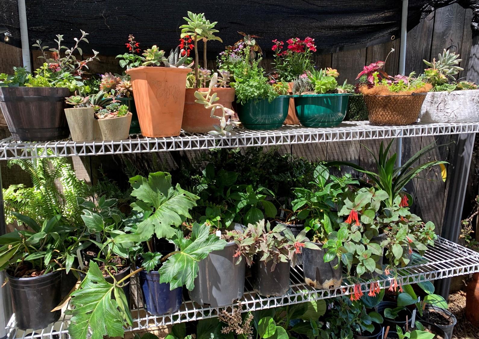 Clayton Valley Garden Club Annual Plant Sale, May 8