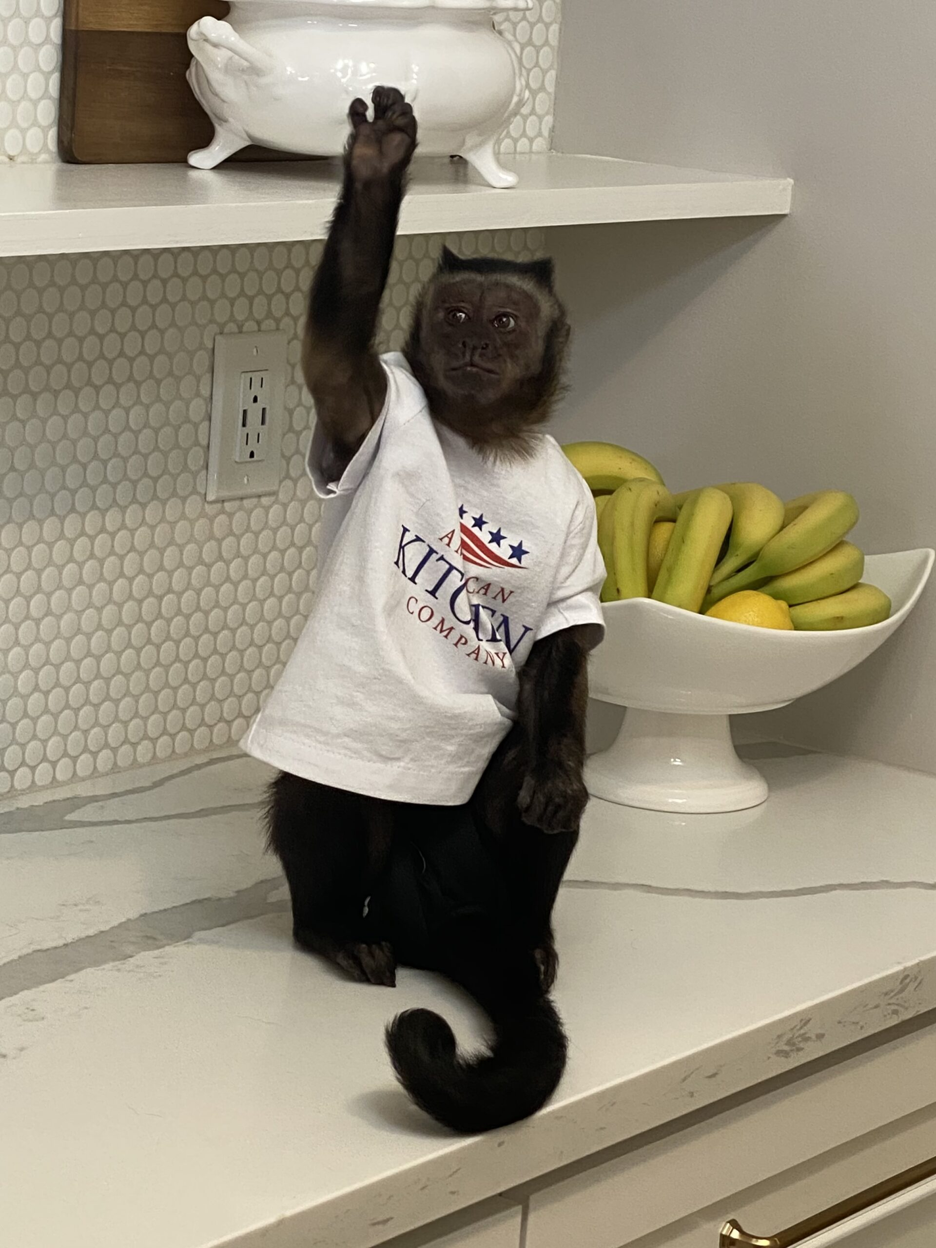 Pay in peanuts, you get monkeys